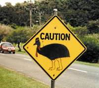 Cassowary crossing sign